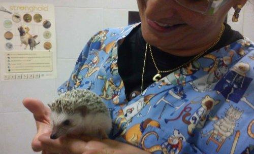 clínica i acupuntura veterinaria