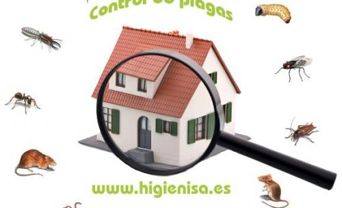 Empresa de desinfecciones Alicante. Somos expertos en control de plagas.