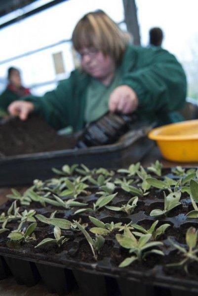 cultivo de plantas ornamentales