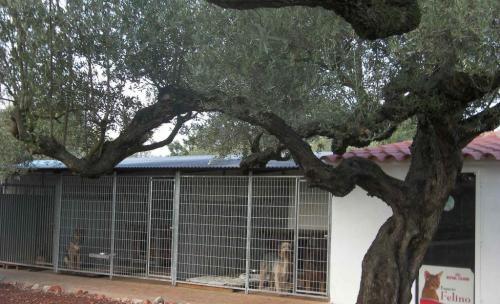 residencia canina y felina
