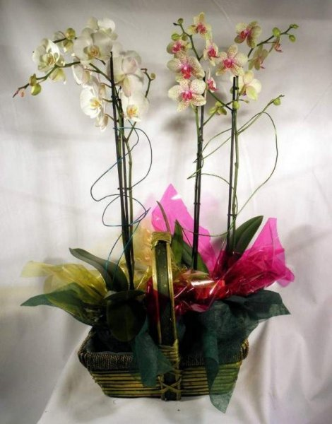 Grupo de orquideas