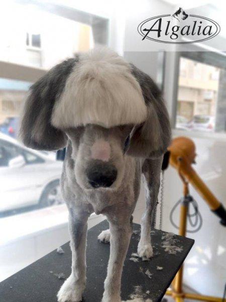 Peluquería canina de Grupo Algalia en Málaga