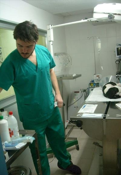 Veterinarios en Málaga capital con Grupo Algalia