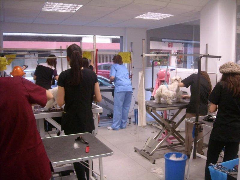 Formación veterinaria en Málaga con Grupo Algalia