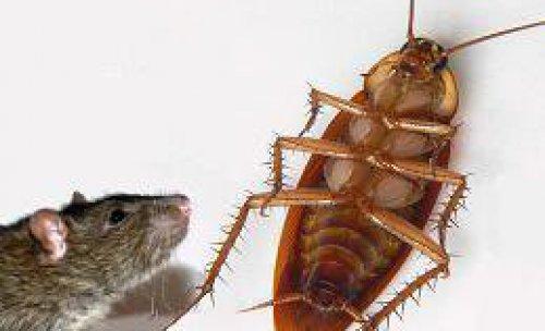 Cuca y Rat