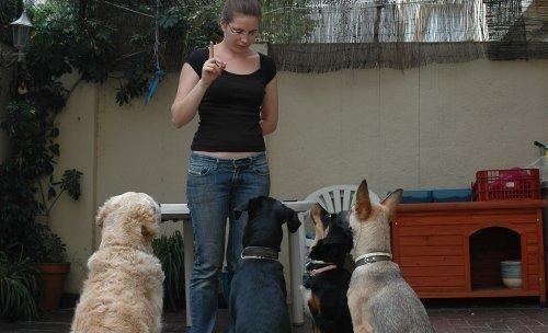 Educació Canina Júlia Guiu