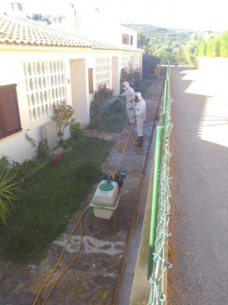 fumigación contra hormigas en urbanización