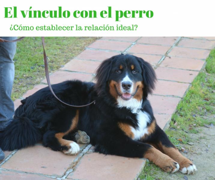 Educación y vínculo con el perro