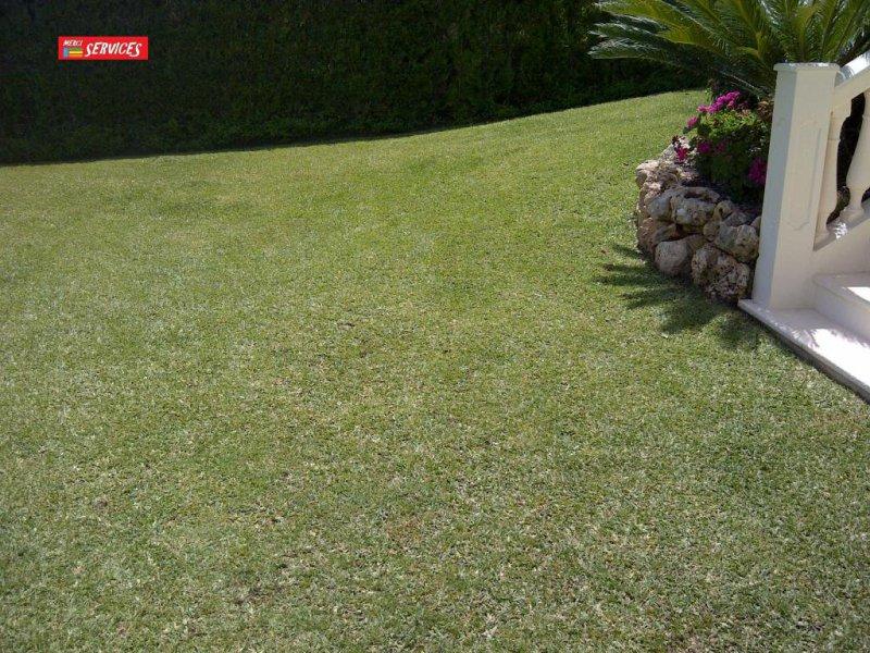 Mantenimiento de grama