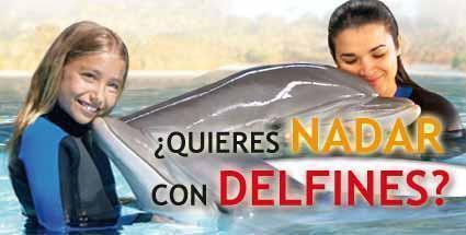 Nadar con delfines www.originalia.es