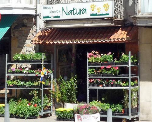 Gran variedad de flores y plantas