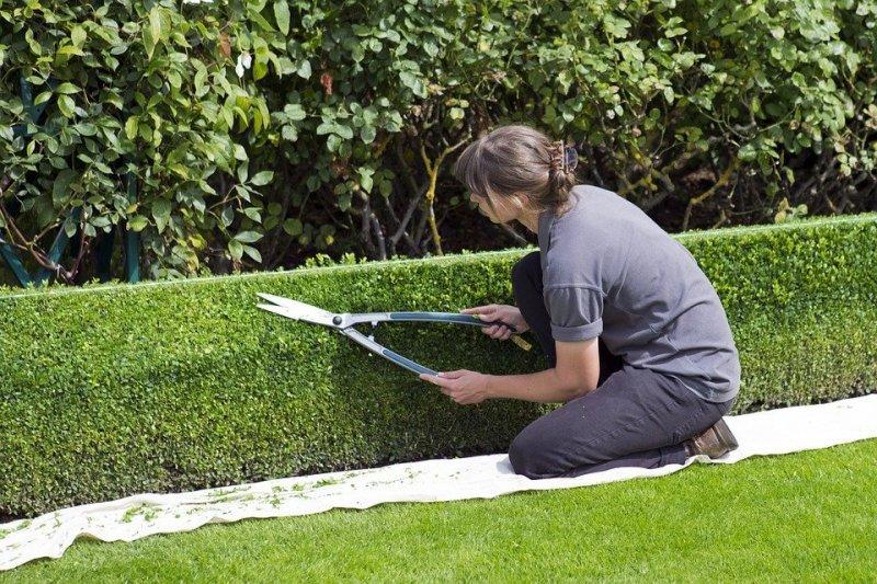 jardineria alex