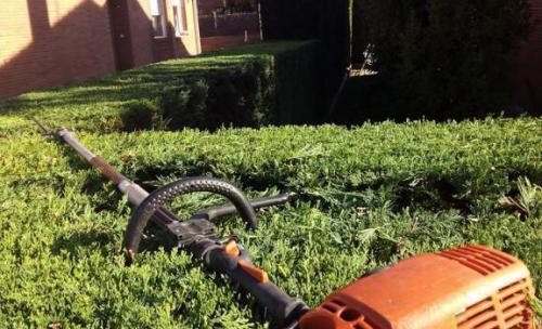GardenWorks, jardinería y cuidado de jardines en Madrid