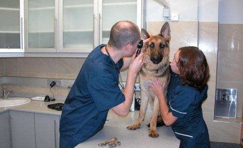 Consultas de pequeños animales de la clínica Eurovet. Atendemos a sus mascotas de forma muy profesional y con todo el cariño que merecen
