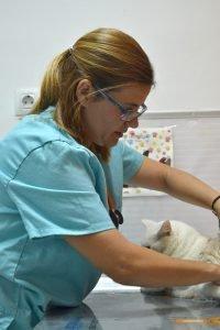 clinica veterinaria los principes