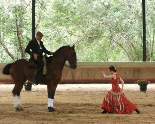 Vinculado a la cría y doma del caballo de pura raza