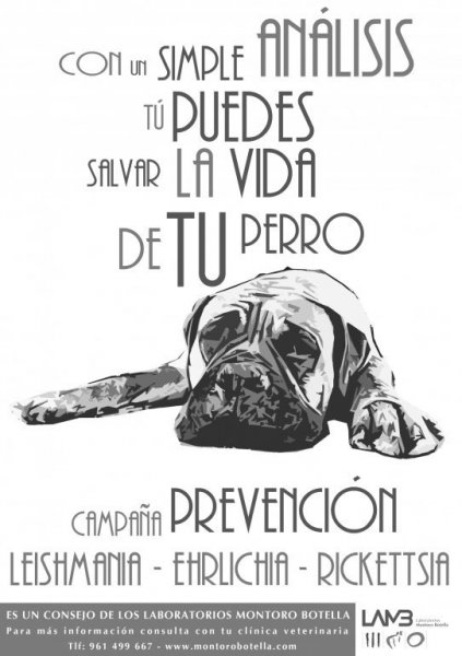 campaña prevencion