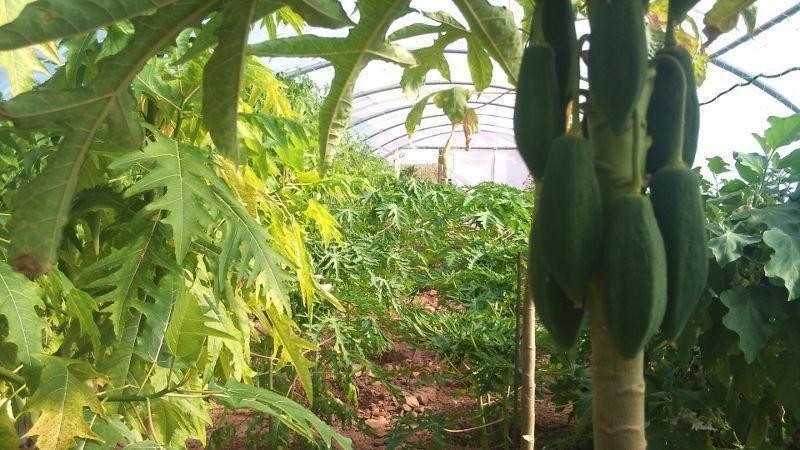 Invernadero propio con cultivos subtropicales.