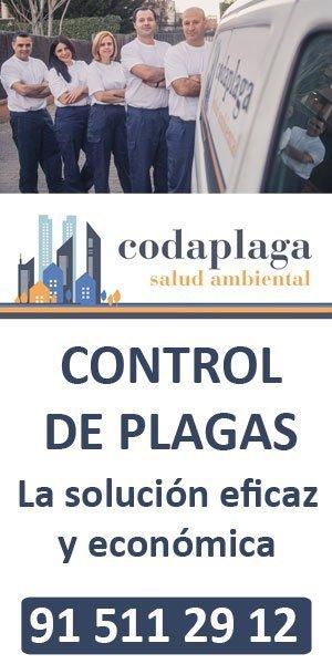 banner codaplaga