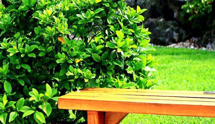 Plante Verde