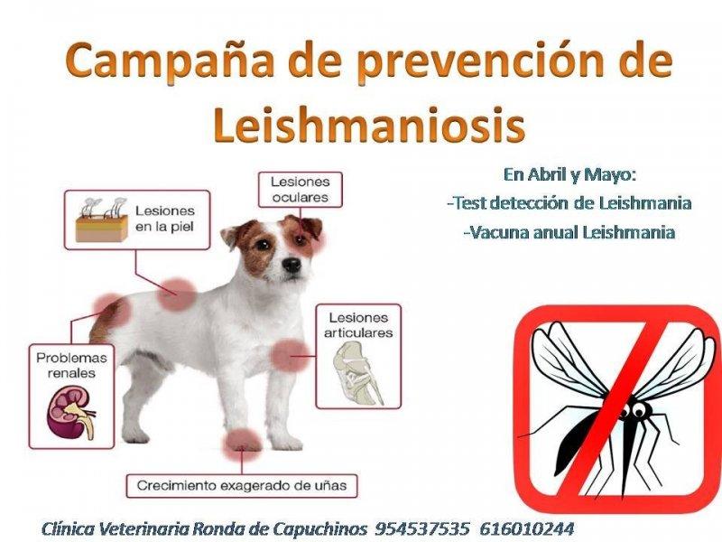 Campaña prevención de Leishmania