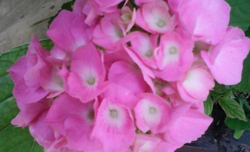 Floristas Rosa Mari