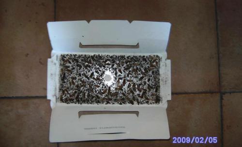 Eliminación Cucarachas