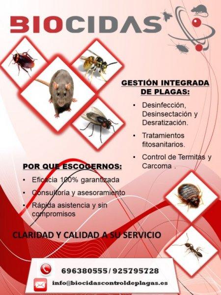 Tratamiento contra roedores e insectos en Toledo