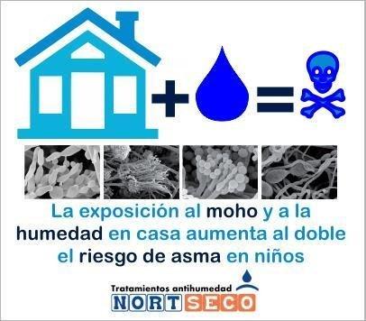 Moho + humedad = riesgo para la salud