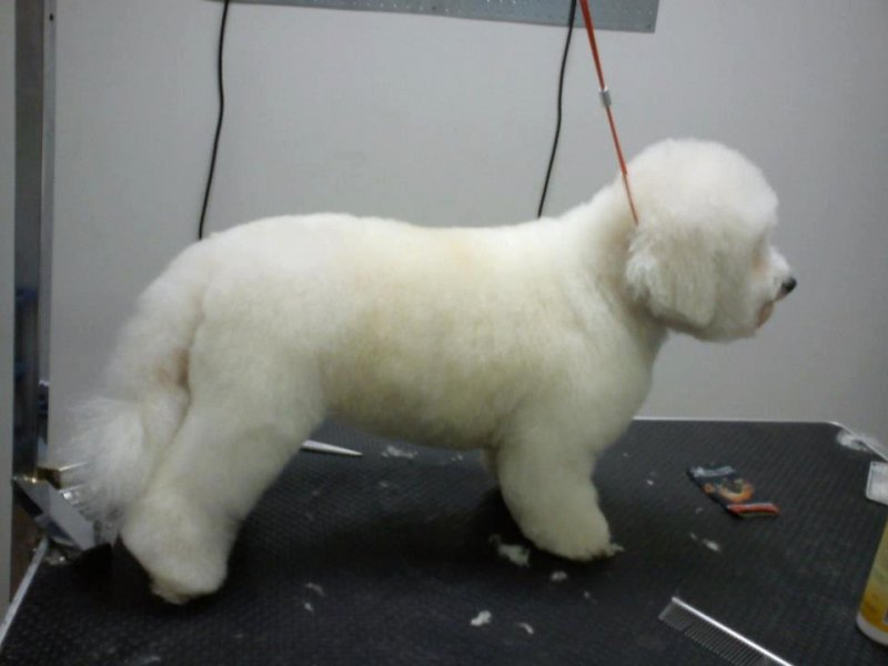 Centro de Peluquería Canina Balmonty Grooming