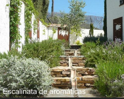 Escalinata de aromaticas