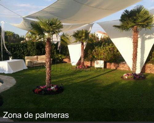 Zona de palmeras
