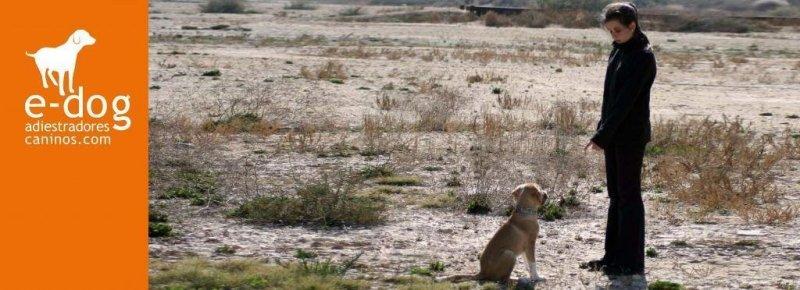 Adiestramiento de obediencia y modificaciones de conducta canina