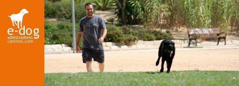 adiestramiento canino en positivo en Alicante y Castellón