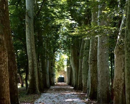 Camino de entrada a la casona