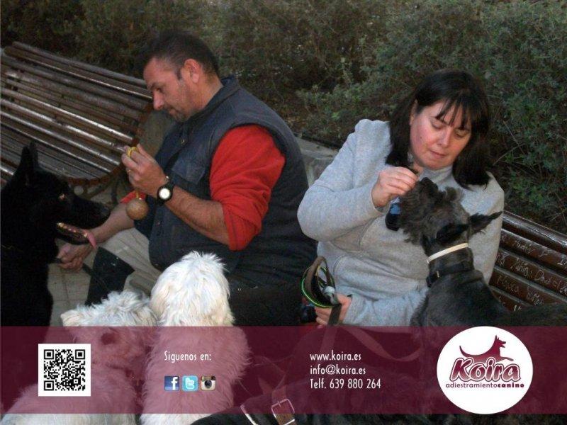 Adiestradores Caninos de KOIRA Educacion Canina en Valencia
