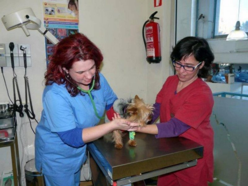 Centre Veterinari Aragó